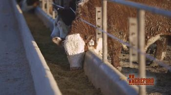 American Hereford Association TV Spot, 'Real Money, Real Results' - Thumbnail 2