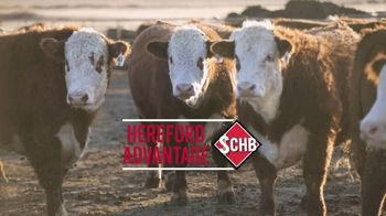 American Hereford Association TV Spot, 'Real Money, Real Results' - Thumbnail 4