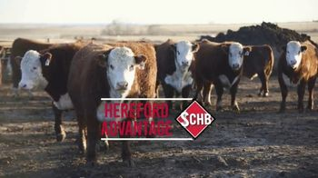 American Hereford Association TV Spot, 'Real Money, Real Results' - Thumbnail 5
