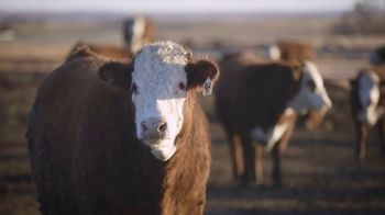American Hereford Association TV Spot, 'Real Money, Real Results' - Thumbnail 6