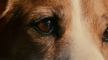 2020 Range Rover Evoque TV Spot, 'A Dog's Dream' Song by Dom James [T1] - Thumbnail 7