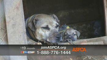 ASPCA TV Spot, 'Dog Fighting: Jack' - Thumbnail 9