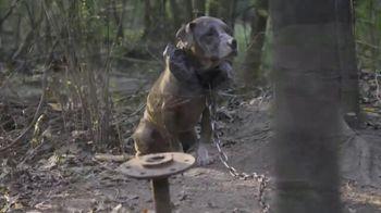 ASPCA TV Spot, 'Dog Fighting: Jack'