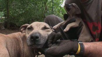 ASPCA TV Spot, 'Dog Fighting: Jack' - Thumbnail 3