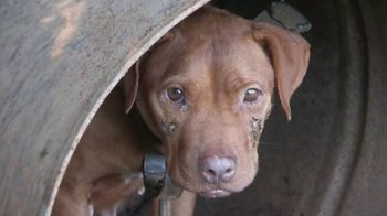 ASPCA TV Spot, 'Dog Fighting: Jack' - Thumbnail 4