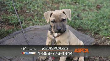 ASPCA TV Spot, 'Dog Fighting: Jack' - Thumbnail 5