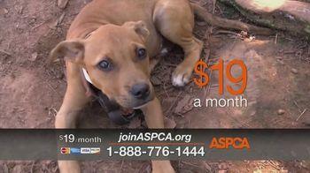 ASPCA TV Spot, 'Dog Fighting: Jack' - Thumbnail 6