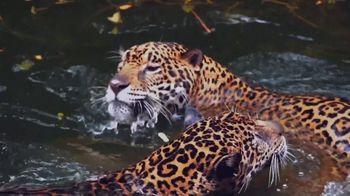 World Wildlife Fund TV Spot, 'WWF on TV: Jaguars' - Thumbnail 1
