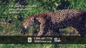 World Wildlife Fund TV Spot, 'WWF on TV: Jaguars' - Thumbnail 6