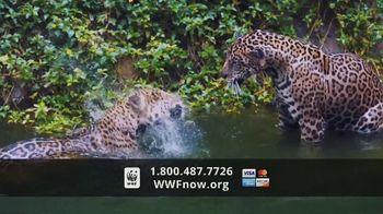 World Wildlife Fund TV Spot, 'WWF on TV: Jaguars' - Thumbnail 7