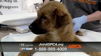 ASPCA TV Spot, 'We Haven't Forgotten About the Animals' - Thumbnail 5