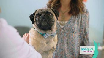 Apoquel TV Spot, 'Talking Dog' - Thumbnail 1