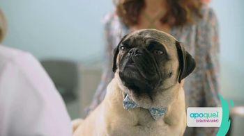Apoquel TV Spot, 'Talking Dog' - Thumbnail 3