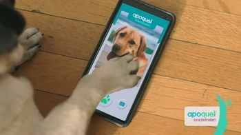 Apoquel TV Spot, 'Talking Dog' - Thumbnail 5