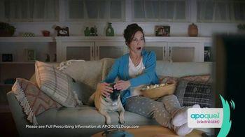 Apoquel TV Spot, 'Talking Dog' - Thumbnail 6