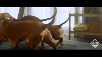 Nature's Recipe TV Spot, 'Measured in Wags: Prime Blends'