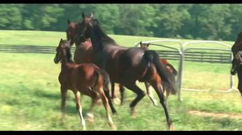 Standardbred Breeders Association of Pennsylvania TV Spot, 'Top Horses' - Thumbnail 4