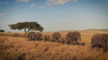 WWF on TV: Elephants thumbnail