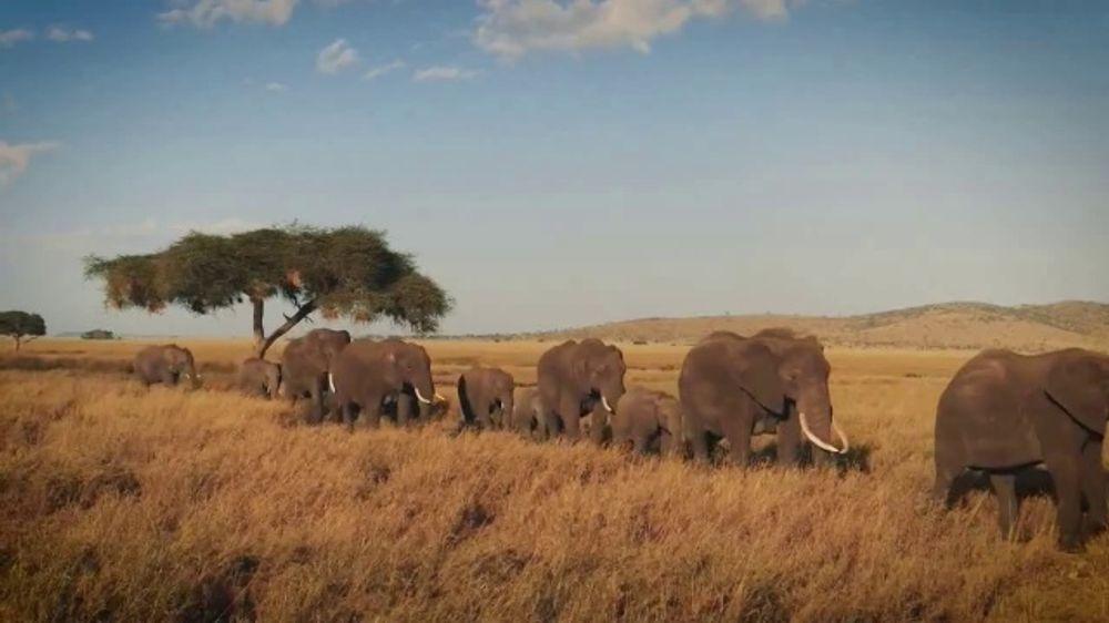 World Wildlife Fund TV Commercial, 'WWF on TV: Elephants'