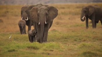 World Wildlife Fund TV Spot, 'WWF on TV: Elephants' - Thumbnail 1