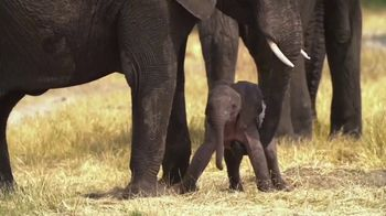 World Wildlife Fund TV Spot, 'WWF on TV: Elephants' - Thumbnail 2