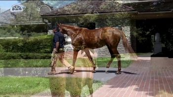 Three Chimneys Farm 2020 Keeneland September Yearly Sale TV Spot, 'Horse of the Year: Gun Runner'