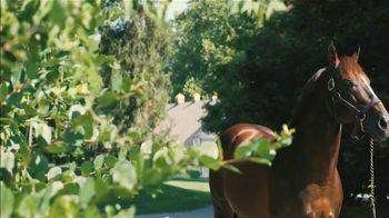 Claiborne Farm TV Spot, 'War Front: International Sire' - Thumbnail 2