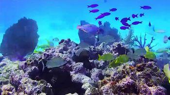 The Florida Keys & Key West TV Spot, 'COVID-19 PSA'
