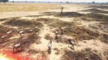 Horn's Africa Safaris TV Spot, 'Adventure of a Lifetime' - Thumbnail 3