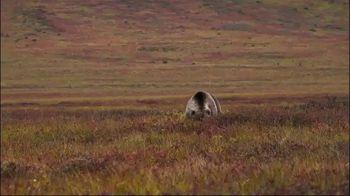 Morrell Yellow Jacket Supreme 3 Field Point Target TV Spot, 'Bear Hunt' - Thumbnail 2