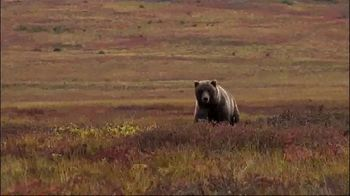 Morrell Yellow Jacket Supreme 3 Field Point Target TV Spot, 'Bear Hunt' - Thumbnail 5
