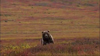 Morrell Yellow Jacket Supreme 3 Field Point Target TV Spot, 'Bear Hunt' - Thumbnail 7