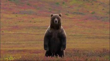 Bear Hunt thumbnail