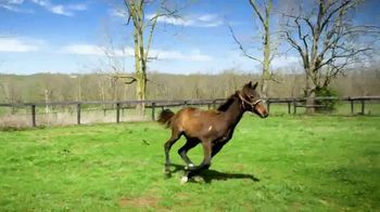 Claiborne Farm TV Spot, 'Runhappy: Addison Run' - Thumbnail 6