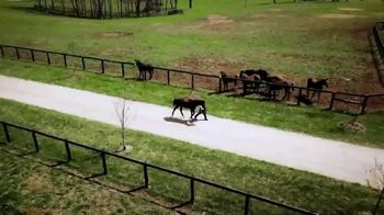 Claiborne Farm TV Spot, 'Runhappy: Addison Run' - Thumbnail 8