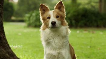 Bravecto TV Spot, 'Parque de perros' [Spanish] - Thumbnail 1