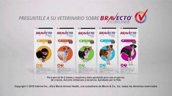 Bravecto TV Spot, 'Parque de perros' [Spanish] - Thumbnail 10