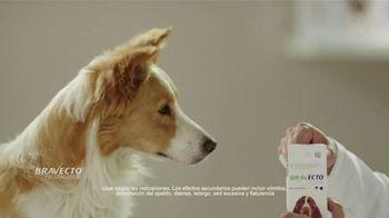 Bravecto TV Spot, 'Parque de perros' [Spanish] - Thumbnail 5