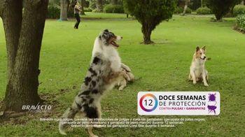 Bravecto TV Spot, 'Parque de perros' [Spanish] - Thumbnail 7