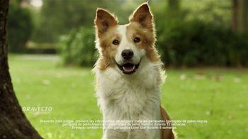 Bravecto TV Spot, 'Parque de perros' [Spanish] - Thumbnail 8