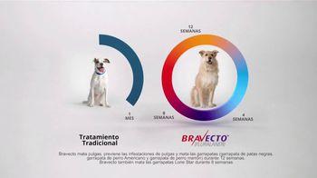 Bravecto TV Spot, 'Parque de perros' [Spanish] - Thumbnail 9