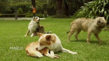 Bravecto TV Spot, 'Parque de perros' [Spanish]