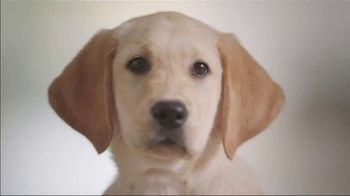 Southeastern Guide Dogs TV Spot, 'Who Knew?' - Thumbnail 3