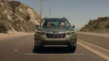 Subaru Forester TV Spot, 'Dog Tested: Honk' [T1] - Thumbnail 1