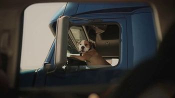 Subaru Forester TV Spot, 'Dog Tested: Honk' [T1] - Thumbnail 7