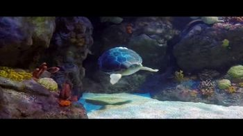 BTN LiveBIG TV Spot, 'Thanks to Minnesota, This Sea Turtle Is Swimming Smoothly' - Thumbnail 5