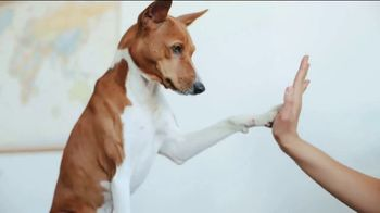 Clear the Shelters TV Spot, 'NBC 5: Fund the Shelters Challenge' - Thumbnail 6