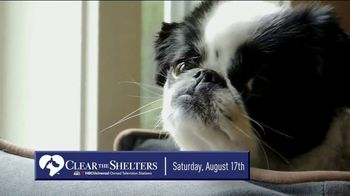 Clear the Shelters TV Spot, 'NBC 5: Fund the Shelters Challenge' - Thumbnail 7