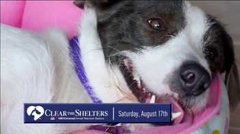 Clear the Shelters TV Spot, 'NBC 5: Fund the Shelters Challenge' - Thumbnail 8
