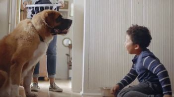 Clorox TV Spot, 'Pet Playtime' - Thumbnail 5